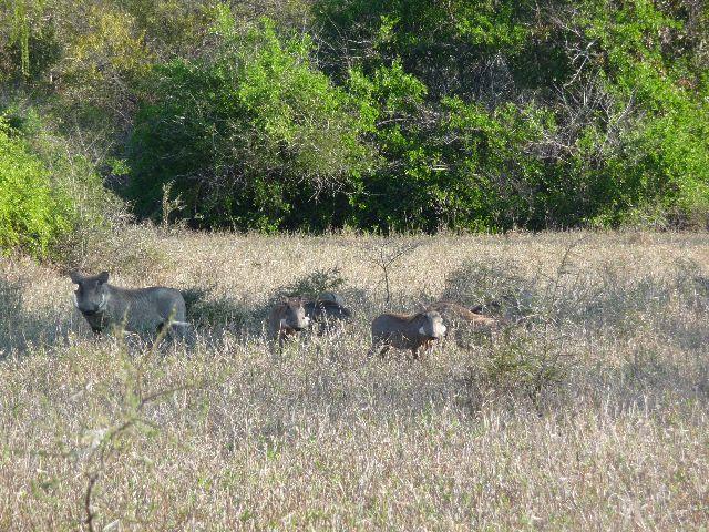 Malawi 2009 144 (2)
