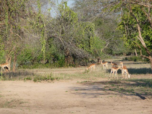 Malawi 2009 146 (2)