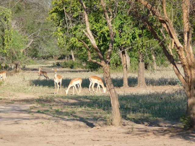 Malawi 2009 147