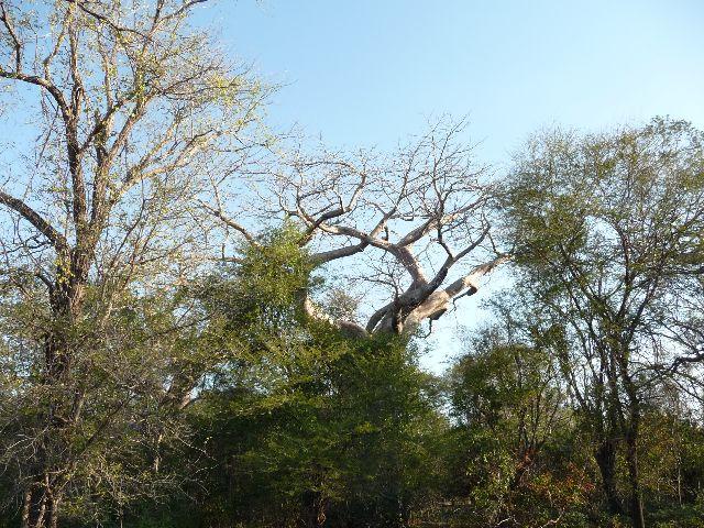 Malawi 2009 150