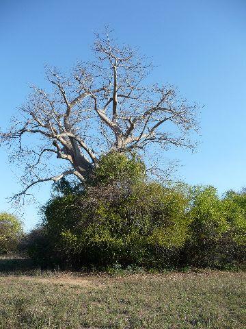 Malawi 2009 155 (2)