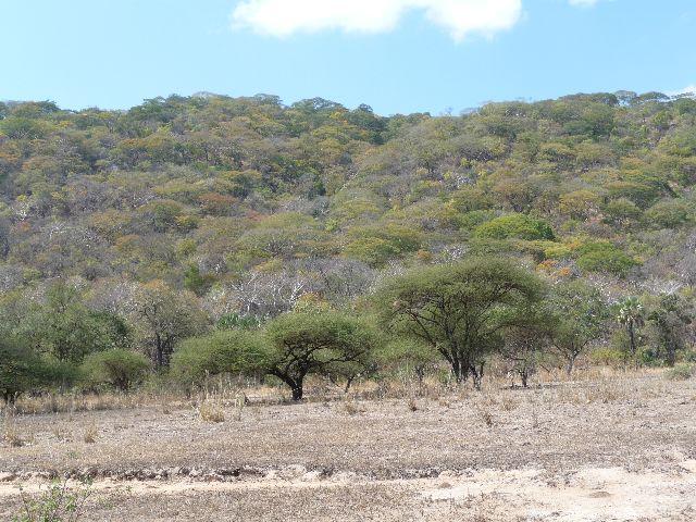 Malawi 2009 187