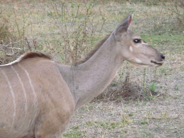 Malawi 2009 200 (2)