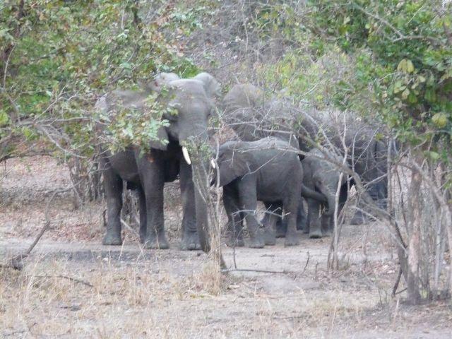 Malawi 2009 202 (2)
