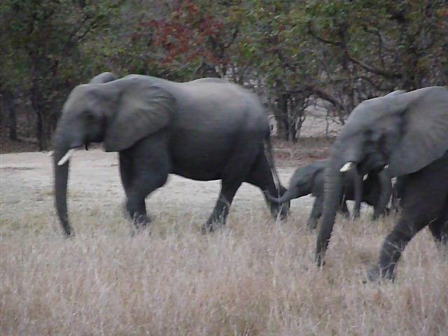 Malawi 2009 207 (2)
