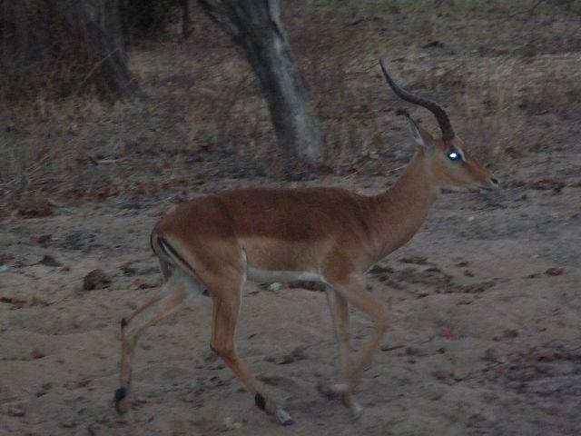 Malawi 2009 225