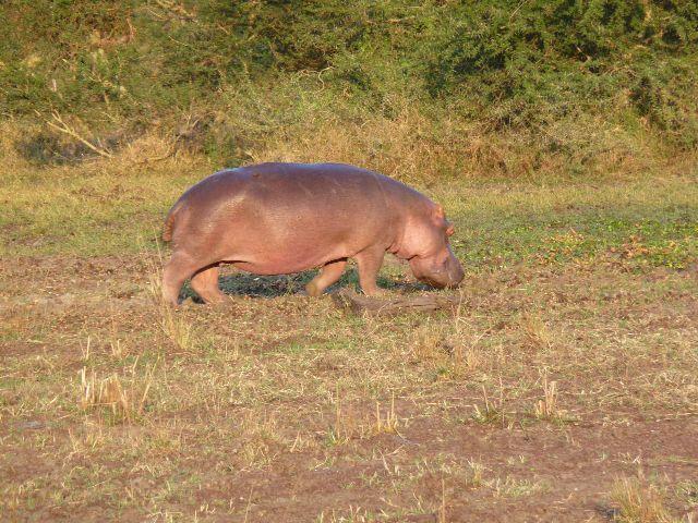 Malawi 2009 235 (2)