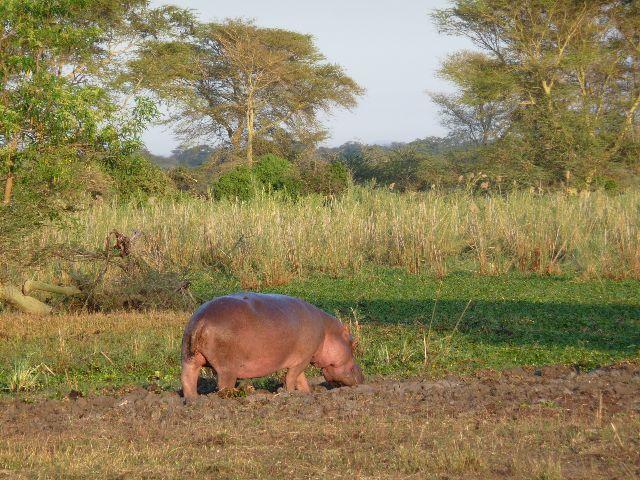 Malawi 2009 237 (2)