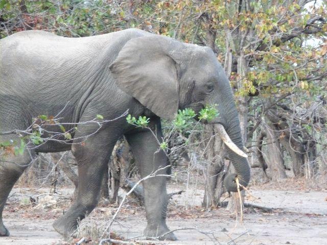 Malawi 2009 238 (2)