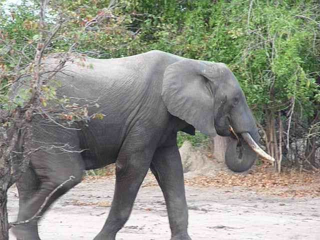 Malawi 2009 239 (2)