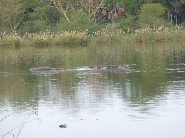 Malawi 2009 242 (2)
