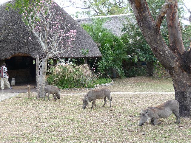 Malawi 2009 277 (2)