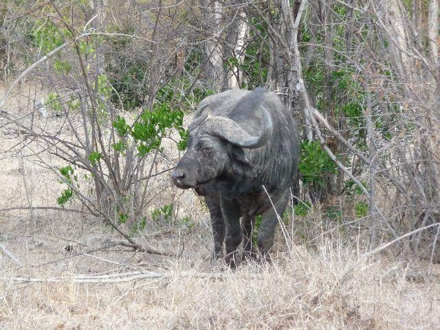 Malawi 2009 285 (2)
