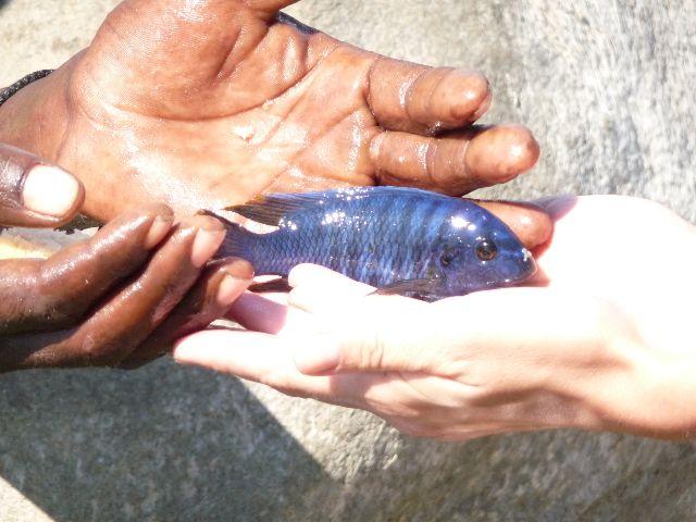 Malawi 2009 393