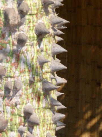 Malawi 2009 435