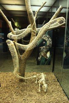 Python-Skelett