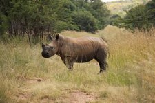 Cul-Rhino