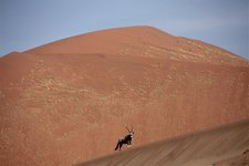 Sos-Dune45-oryx
