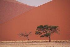 Sos-Dunes-Baum