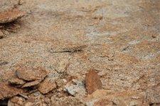 Eidechse-Granit