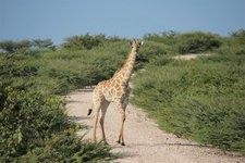 Et-Giraffe1
