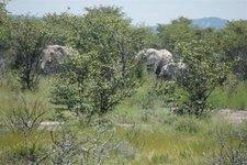 Okau-Elefanten