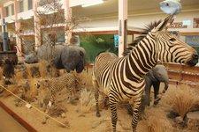 Swakopmund-Museum1