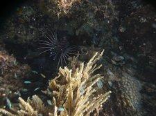 Unterwasser4