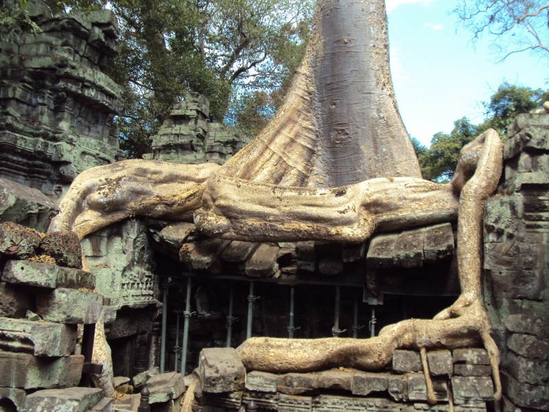 Der Urwald nimmt sich, was er will. Zum Beispiel den Ta Prohm-Tempel.