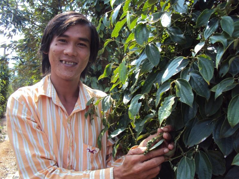 Der Pfeffer wächst in Kampot.