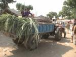 Pushkar – Wagen mit Futter