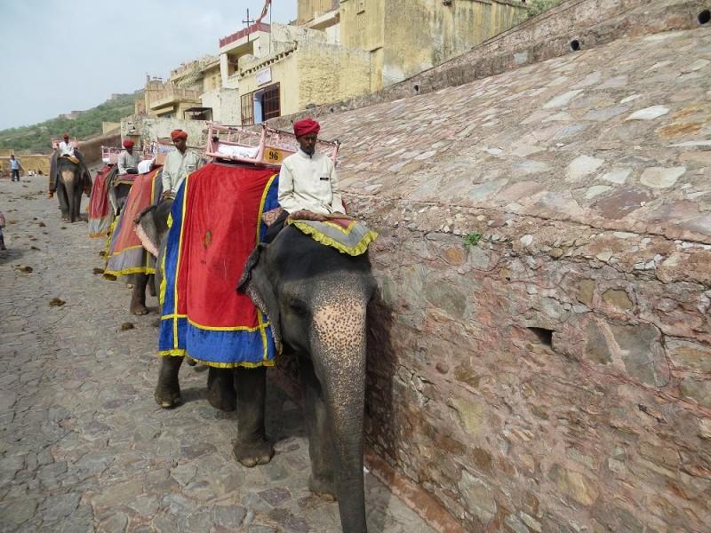 fort amber bei jaipur elefanten