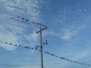 Tauben auf Stormleitung