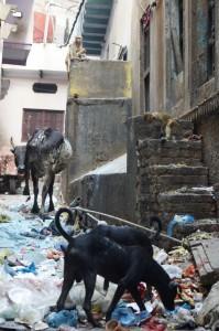 Mülleimer habe ich noch nicht gesehen. Braucht man aber auch nicht. Schließlich freuen sich Hunde, Affen und Kühe. Morgens um halb 8 werden die strassen sauber gemacht. Und dann wird wieder alles auf die Strasse geworfen...