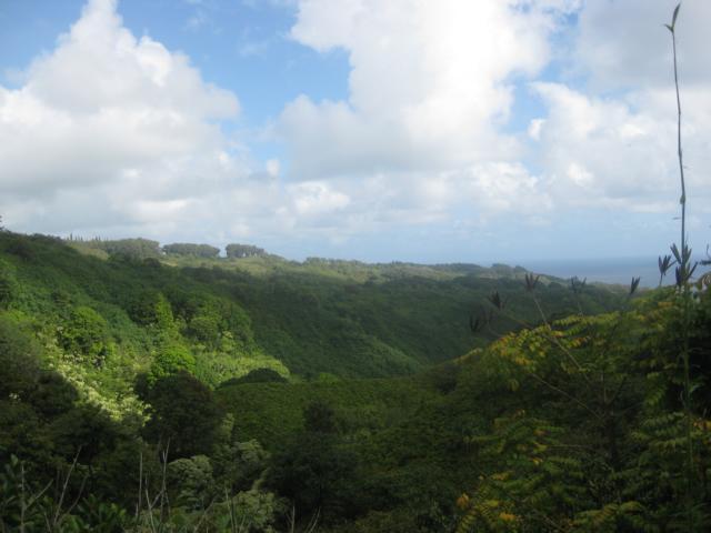 """Regenwald auf der """"Road to Hana"""""""