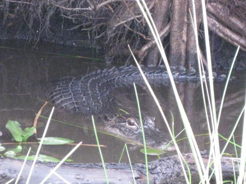 Vorsicht vor den Alligatoren