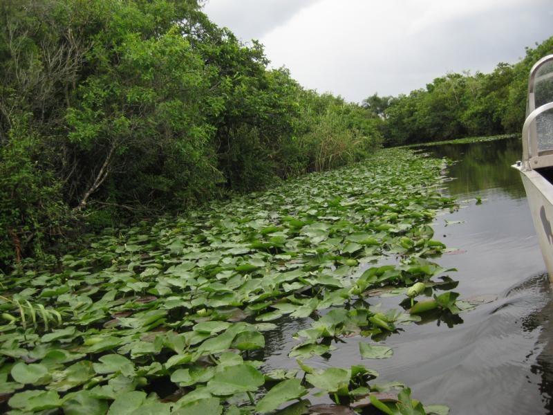 Auf in die Everglades