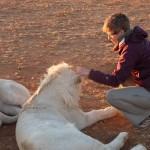 Schon mal einen Löwen geknuddelt?