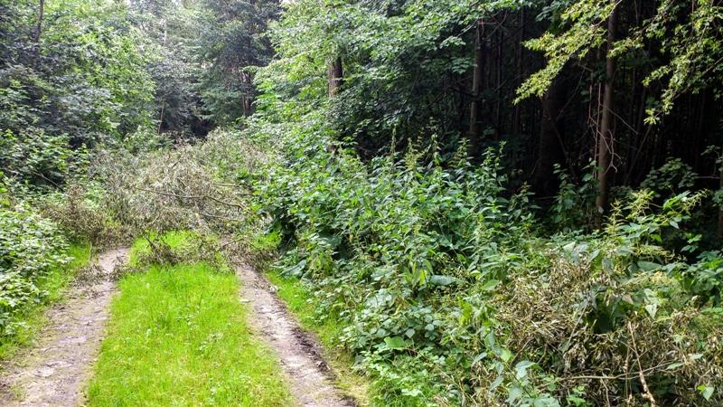 Ab durch die Büsche - abermals Rheumaprävention