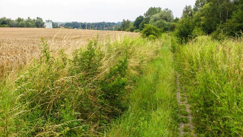 Irgendwo muss doch... der Trail sein... Gras ist über die Sache gewachsen.