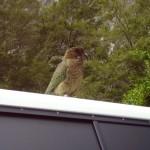 Birds 0013
