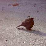Birds 0016