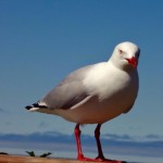 Birds 0020