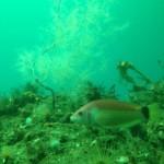 Unterwasserobservatorium