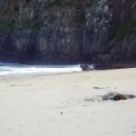 Schlafende Seelöwen