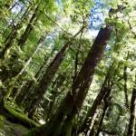 Tolle Wälder