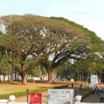 Natur in Old Goa