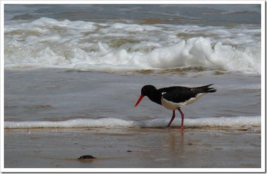 2011-01-19 Great Ocean Road 050