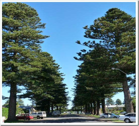 2011-01-19 Great Ocean Road 081