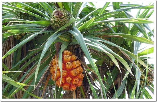 2011-03-15 Bali 022